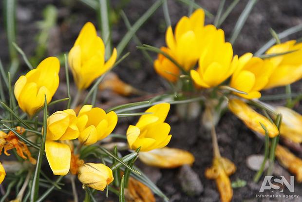 Перший день квітня: українців чекає тепло, але буде вітер
