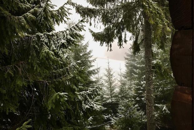 Карпаты припорошило снегом.