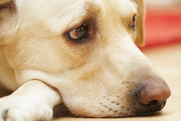Верность и после смерти: собака три месяца ждёт хозяйку на месте ее гибели