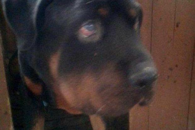 Изверги на месяц закрыли собаку в квартире в Кременчуге
