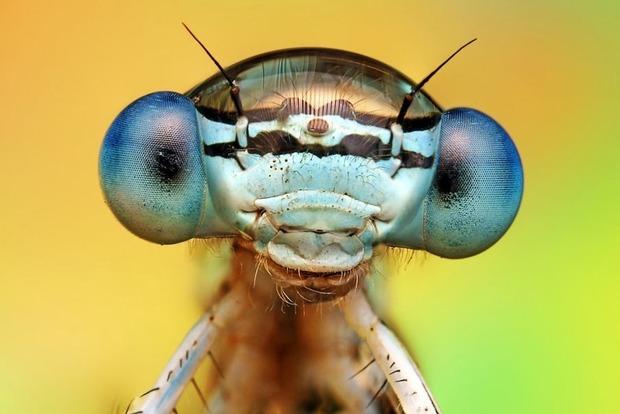 В Украине обитают 53 вида насекомых, которые могут переносить вирус Зика