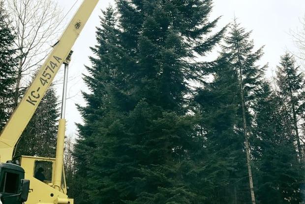 Появилось первое фото главной елки Украины