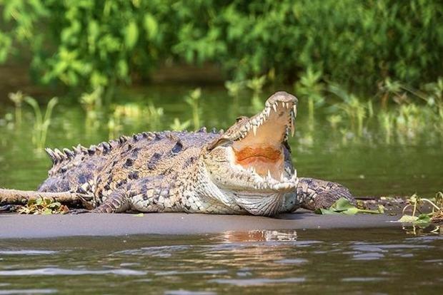 На Шри-Ланке журналиста Financial Times до смерти загрыз крокодил