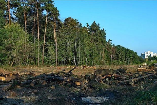 Родственники прокуроров и батюшки Московского патриархата захватывают Беличанский лес