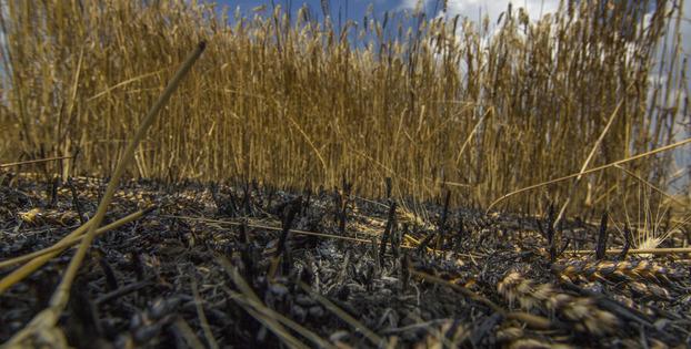 Фото к материалу: В Германии заявили о провале «хлебного перемирия» на Донбассе