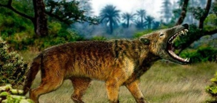 Обнаруженного в Африке неизвестного ранее хищника назвали пакакали
