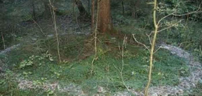 Духи водят хоровод. В лесу Крыма сделали загадочное фото