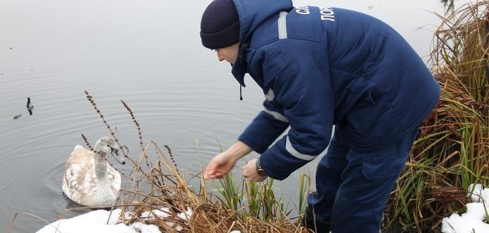 Винницкие спасатели спасли лебедя из ледяной воды