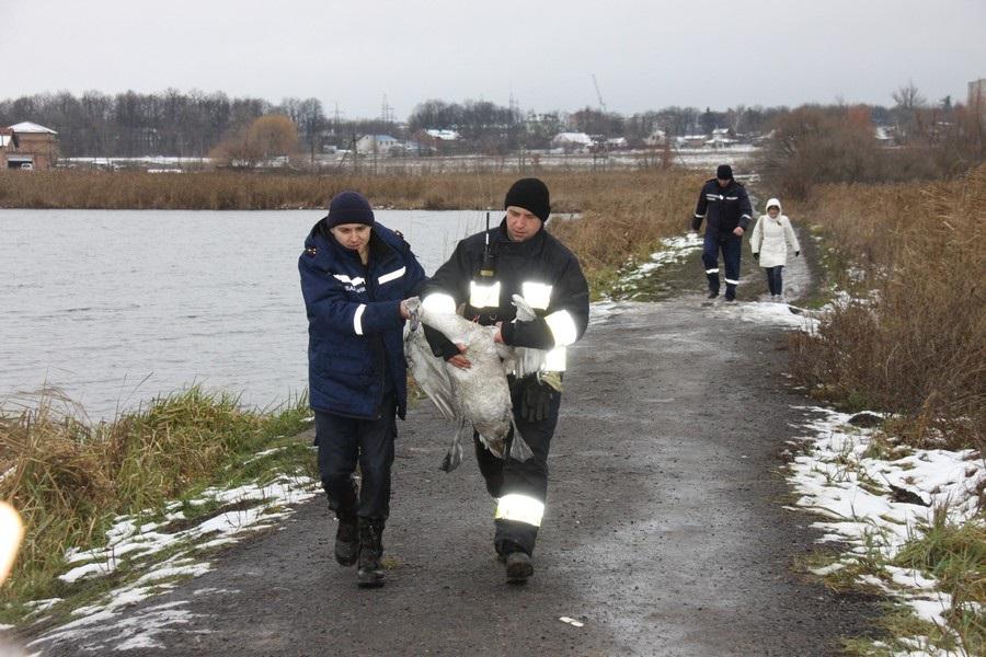 новости, украина, винница, спасатели, лебедь, вода, спасли