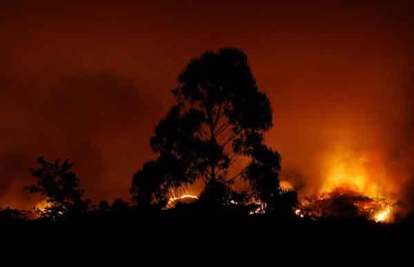 Лесные пожары вПортугалии