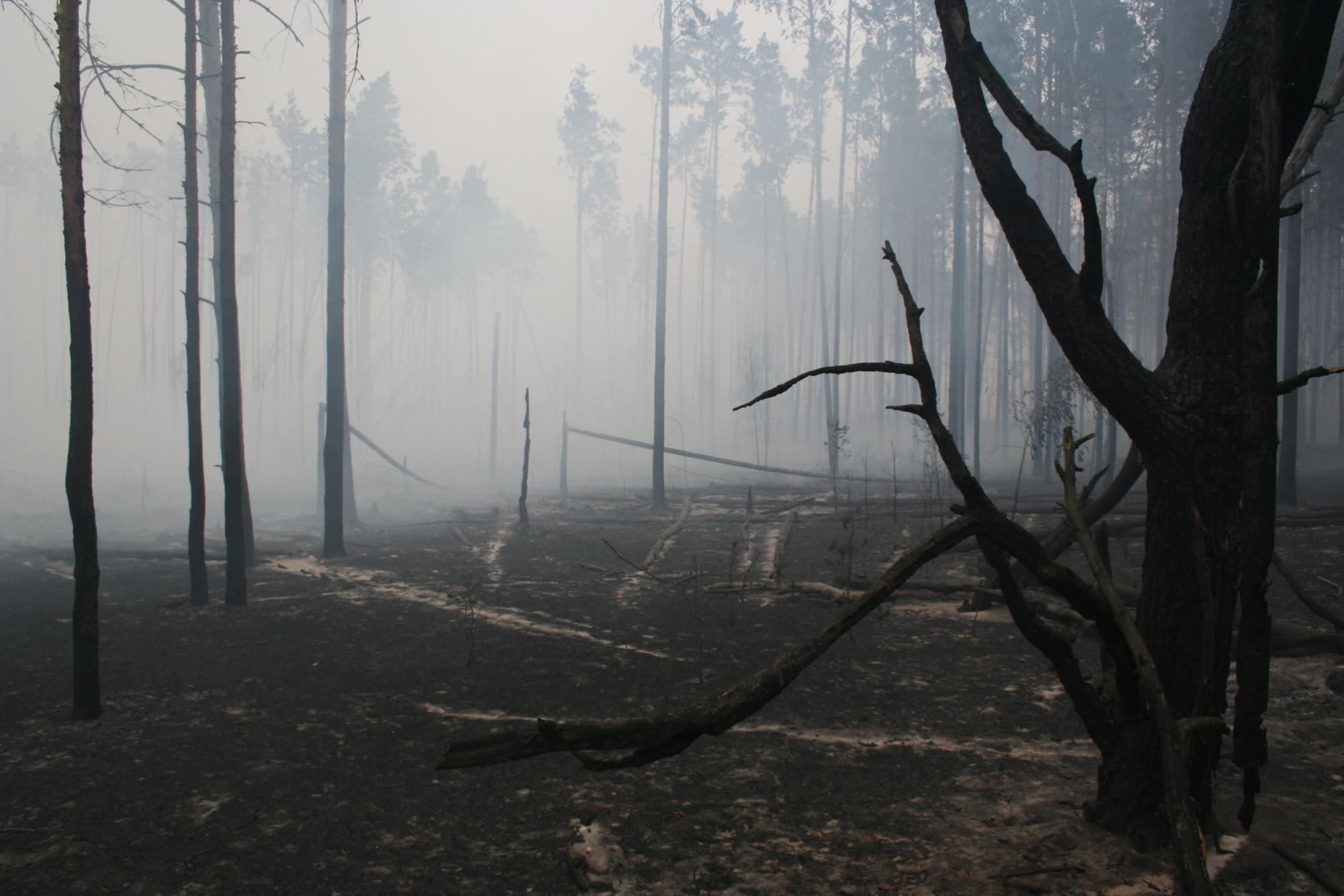 Около 40га хвойного леса полыхает влесничестве под Павлоградом